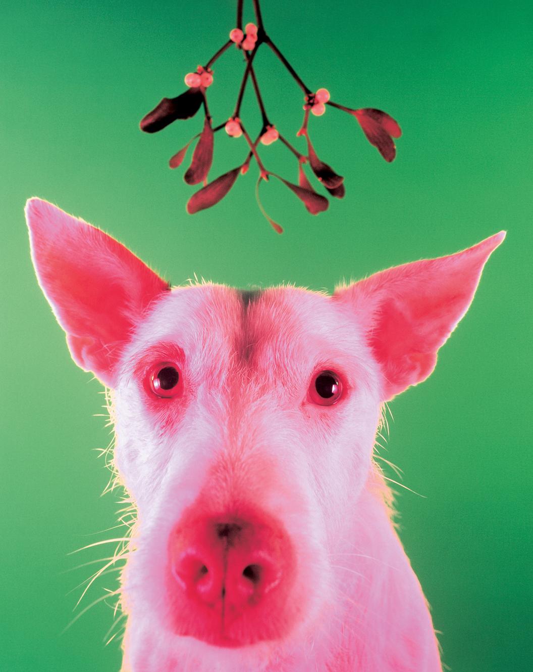 Pigdog 1994
