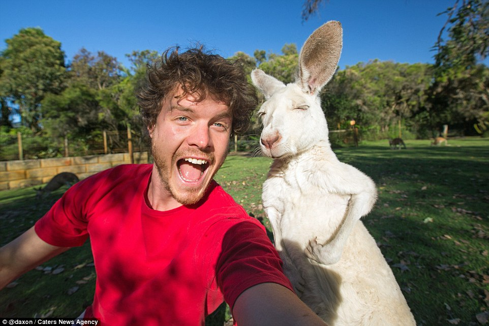 2F9119FE00000578-3370281-An_albino_kangaroo_squints_in_the_s