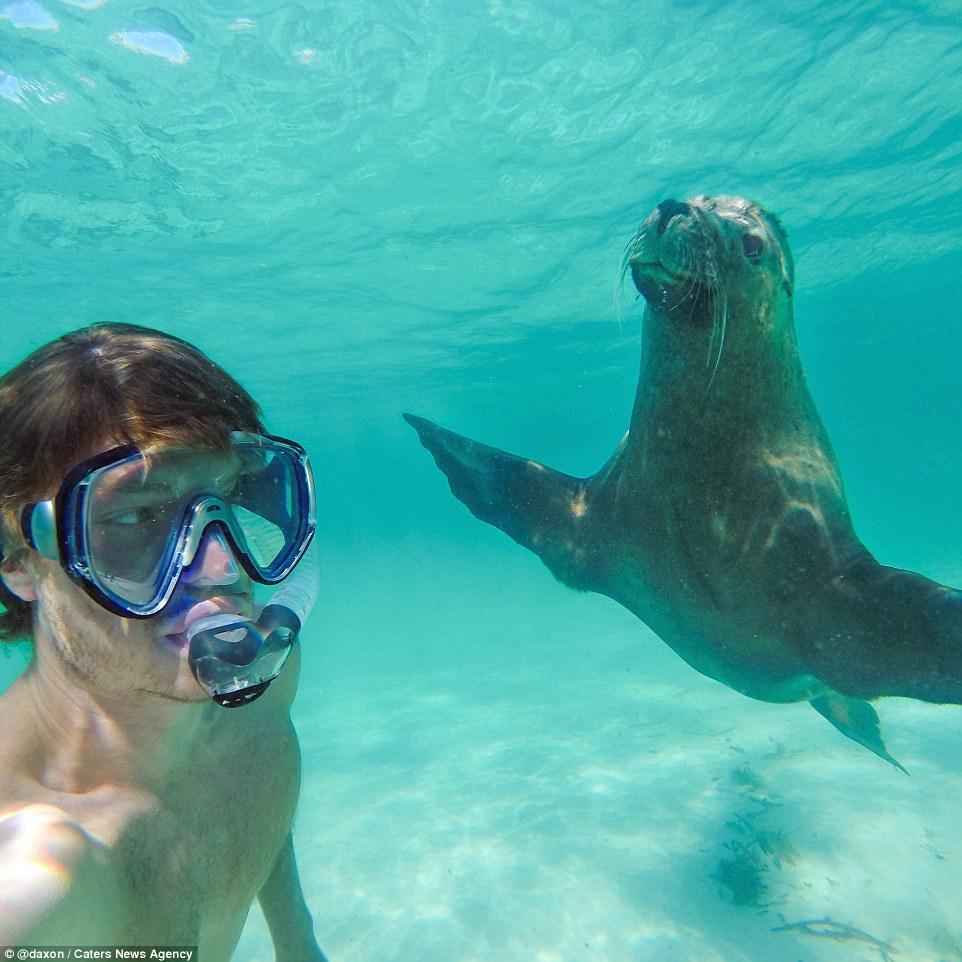 2F911A4100000578-3370281-Under_the_sea_Even_this_sea_lion_wa