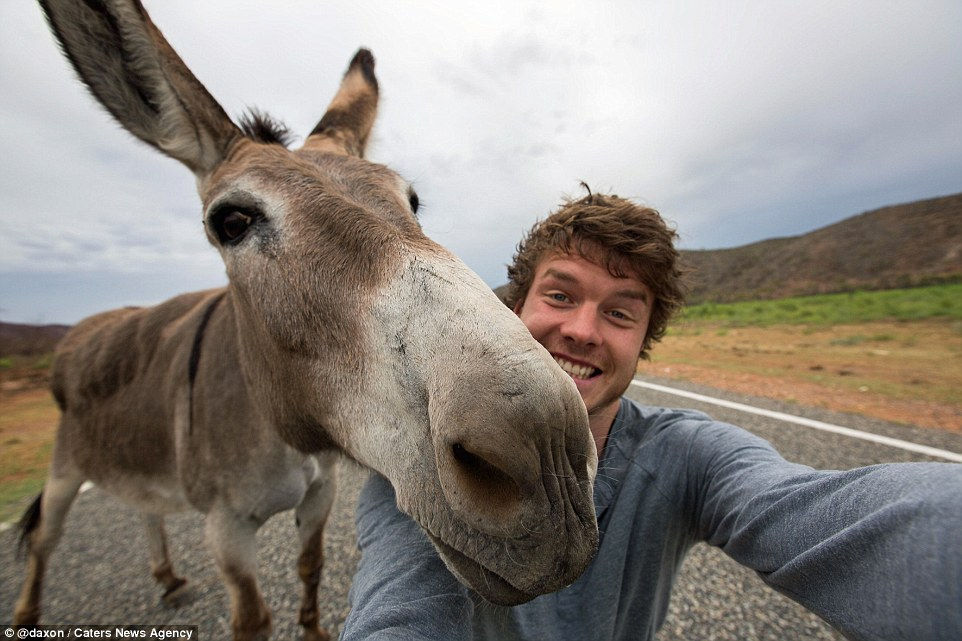 2F911ADB00000578-3370281-Close_up_confidence_This_donkey_cer