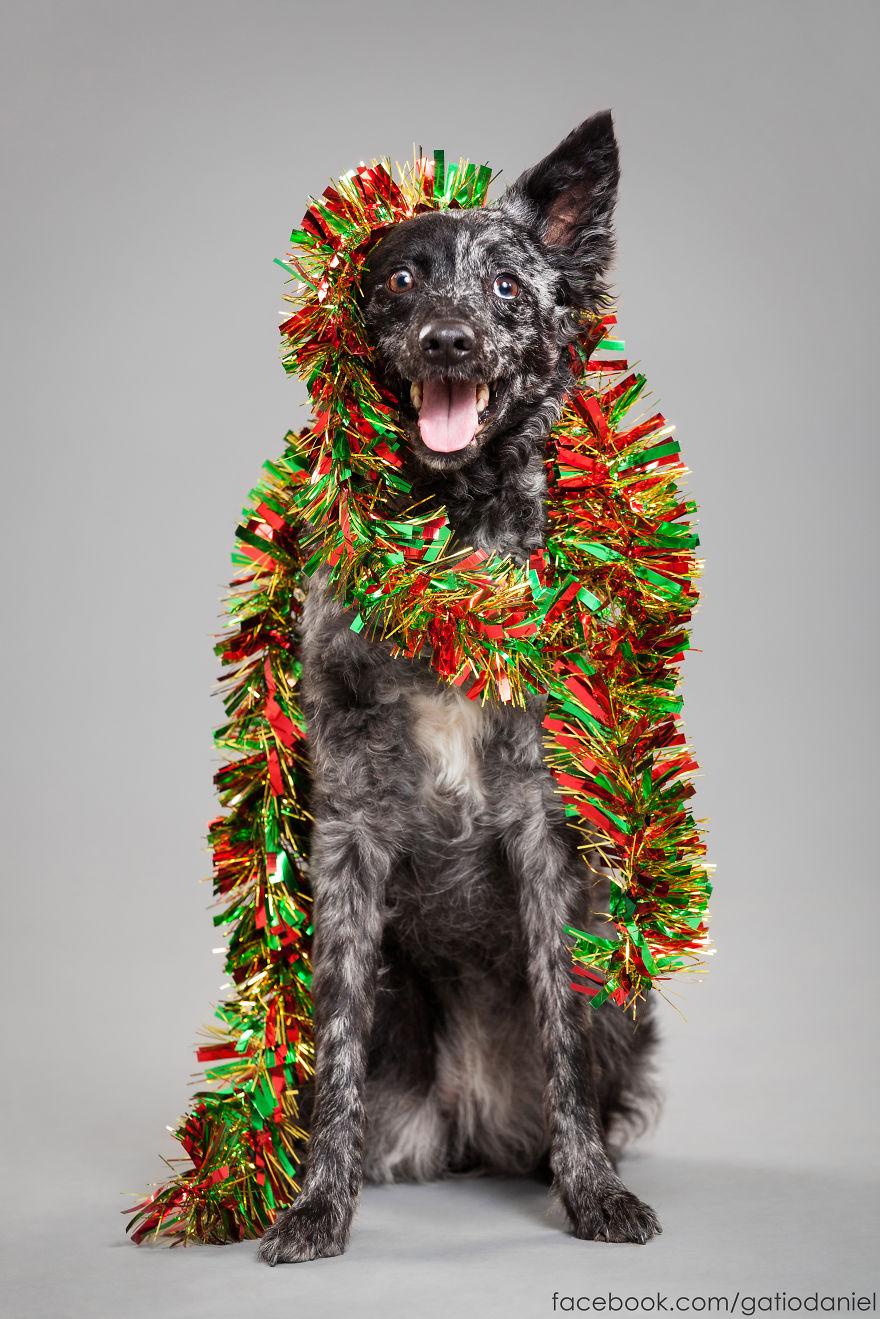 i-took-christmas-themed-dog-portraits-to-wish-you-happy-holidays-10__880