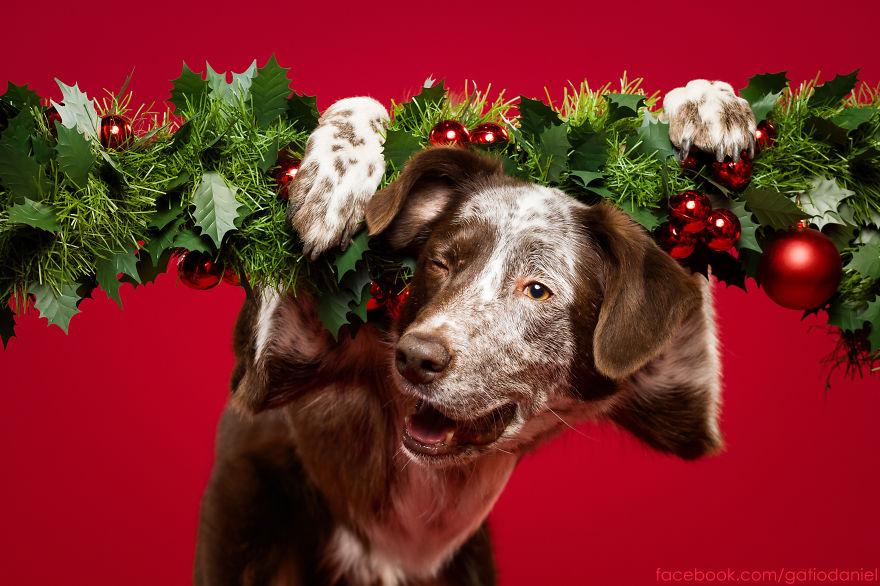 i-took-christmas-themed-dog-portraits-to-wish-you-happy-holidays-6__880