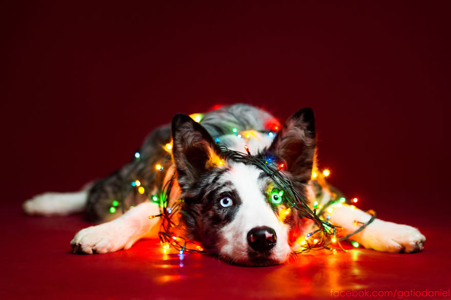 Christmas Themed Pictures