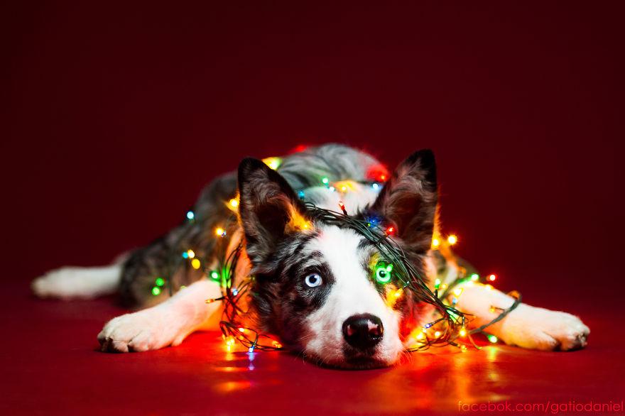 i-took-christmas-themed-dog-portraits-to-wish-you-happy-holidays__880