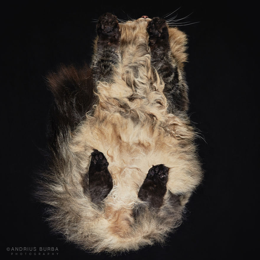 25-photos-of-cats-taken-from-underneath-16__880