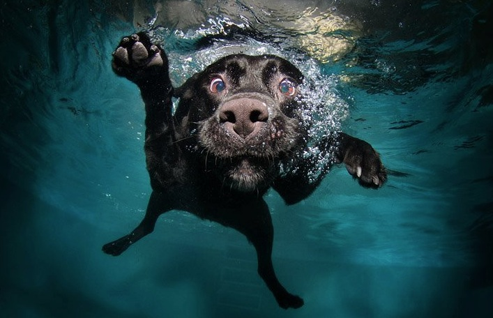 diving-dogs-photography1