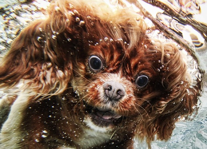 diving-dogs-photography2