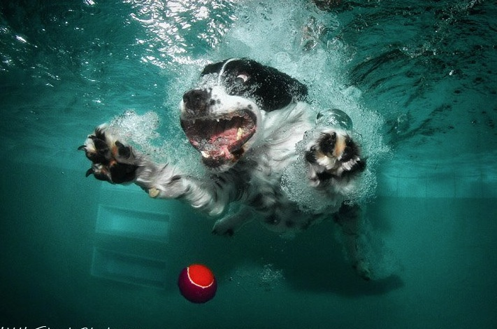 diving-dogs-photography5