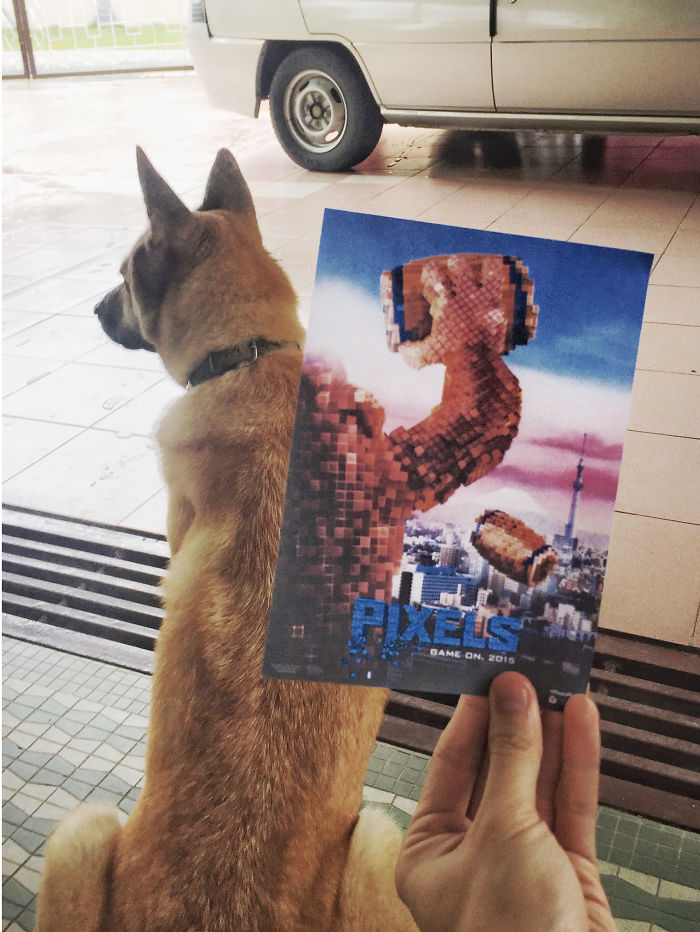 instagrammer-mashes-up-famous-movie-posters-with-real-life-puppies-4__700