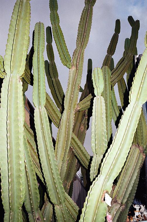 succulentflashweb