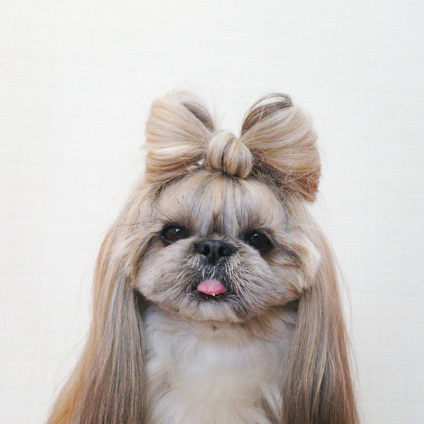 dog-hairstyles-instagram-kuma-moem-n-105__605