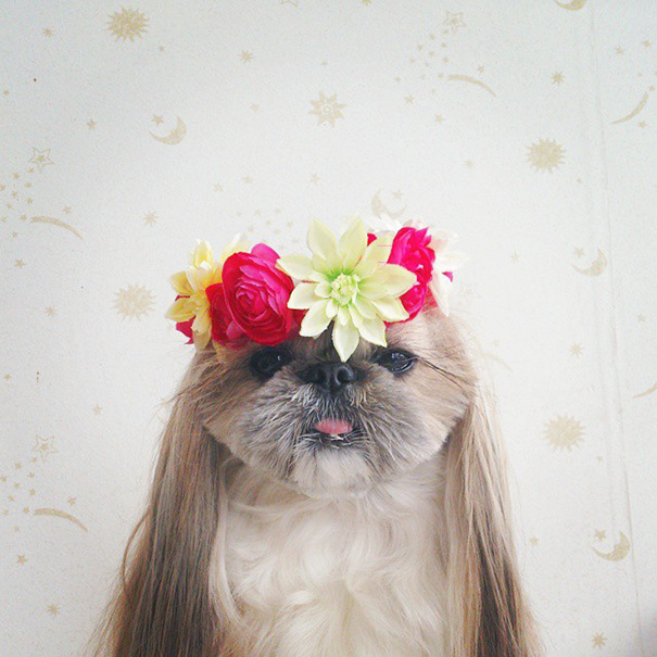 dog-hairstyles-instagram-kuma-moem-n-116__605