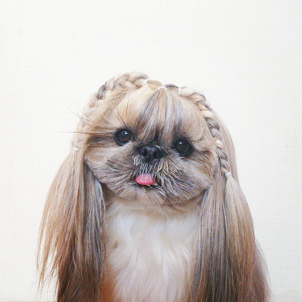 dog-hairstyles-instagram-kuma-moem-n-119__605