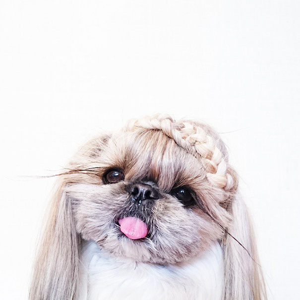 dog-hairstyles-instagram-kuma-moem-n-133__605