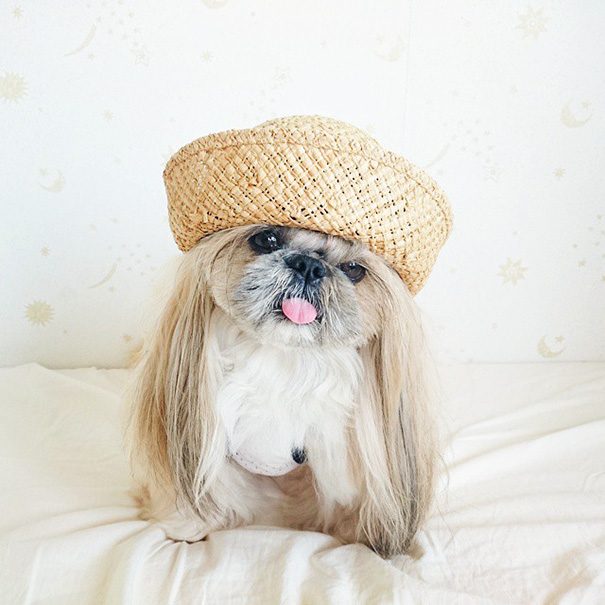 dog-hairstyles-instagram-kuma-moem-n-138__605