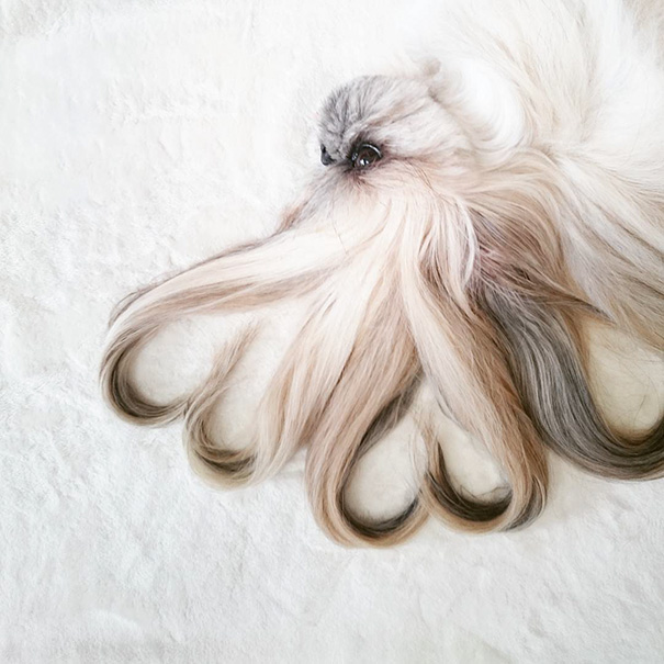dog-hairstyles-instagram-kuma-moem-n-147__605