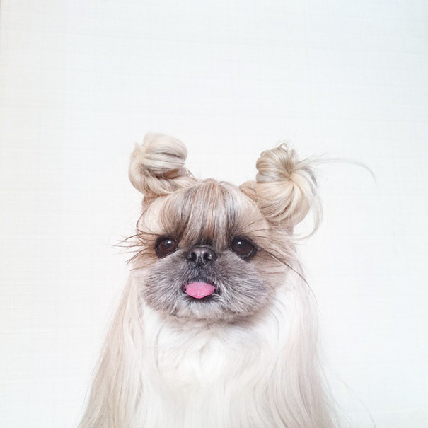 dog-hairstyles-instagram-kuma-moem-n-168__605